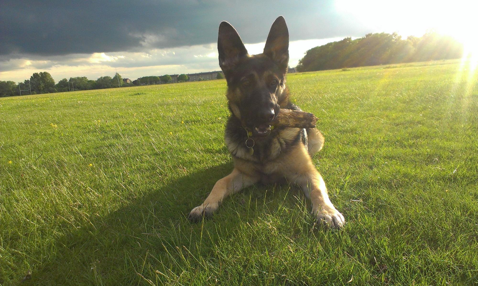 Dog Training Planet